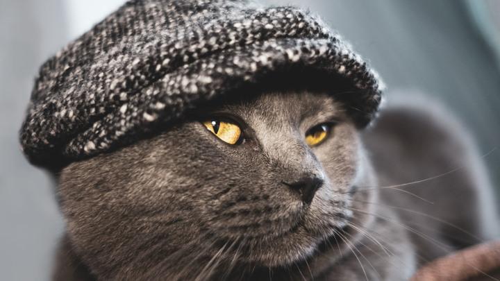 Прожить можно, если ты кот: В России оценили новый размер МРОТ