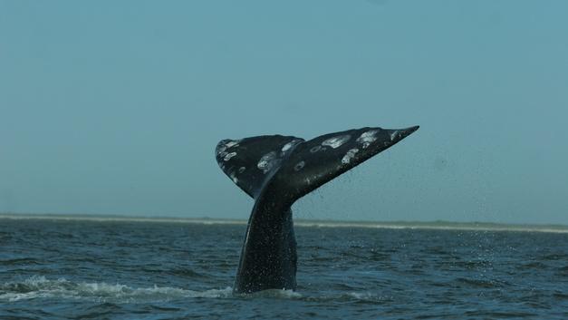«Они подплывали и обнимали нас огромными плавниками» - русские исследователи об уникальной встрече с китами
