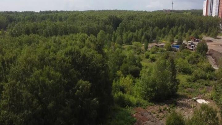 Челябинцам возле домов вместо леса проложат шумную дорогу