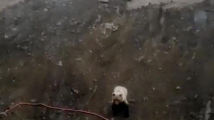 В окрестностях Кемерова снова заметили медведя