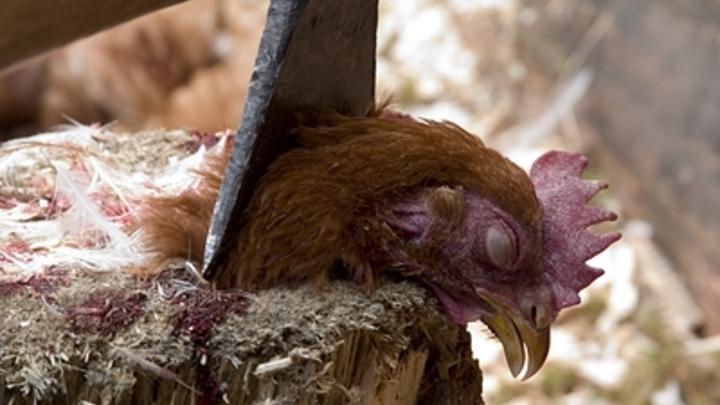Семь ударов топором: судимая забайкалка убила спящего сожителя