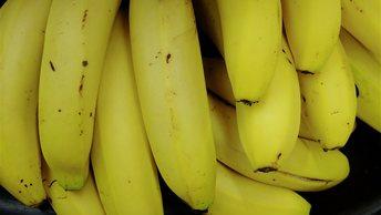 Японские учёные вывели чудо-банан