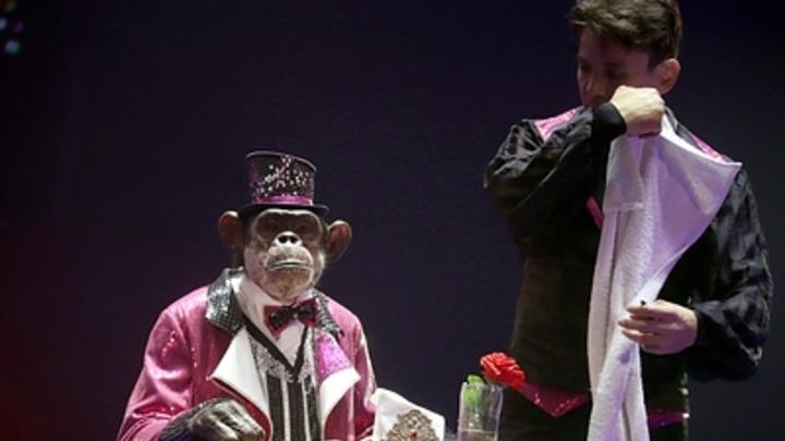 Никаких фокусов: Самарский цирк обязали организовать вентиляцию помещений с животными