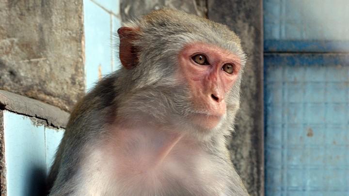 Сбежавшая из зоопарка обезьяна три дня прячется в торговом центре в Асбесте