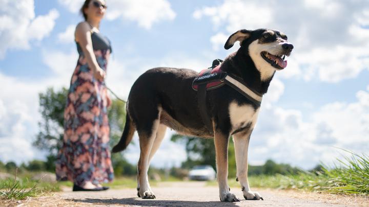 Ткнули пальцем в небо, а попали в собак: Учёные предложили социально дистанцировать животных