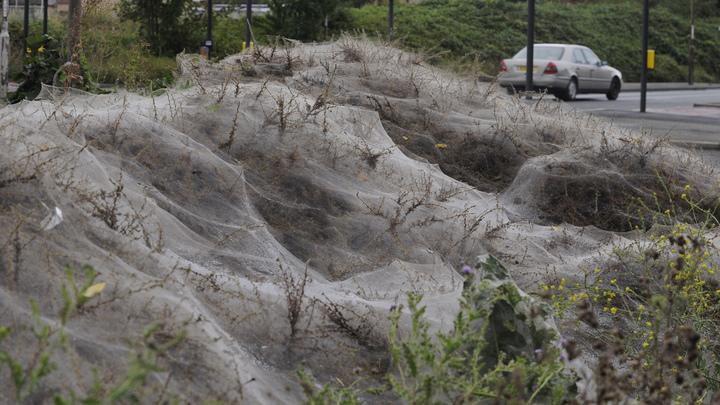 Умри, всё живое! Полчища гусениц оставят Россию без урожая