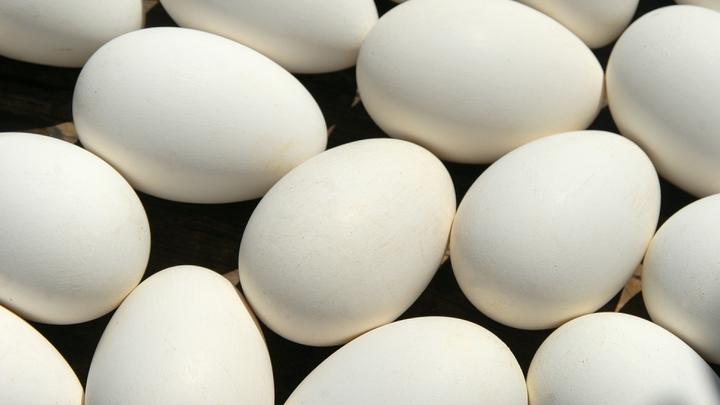 Россельхознадзор назвал шансы попадания опасных яиц из Европы в Россию