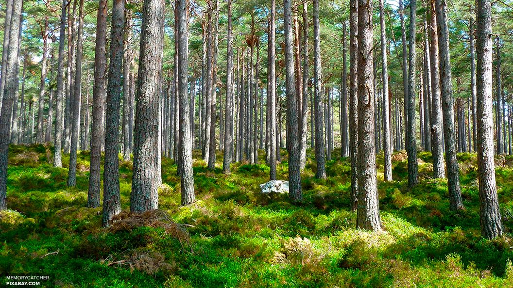 Экологи составили карту будущих природных катастроф России