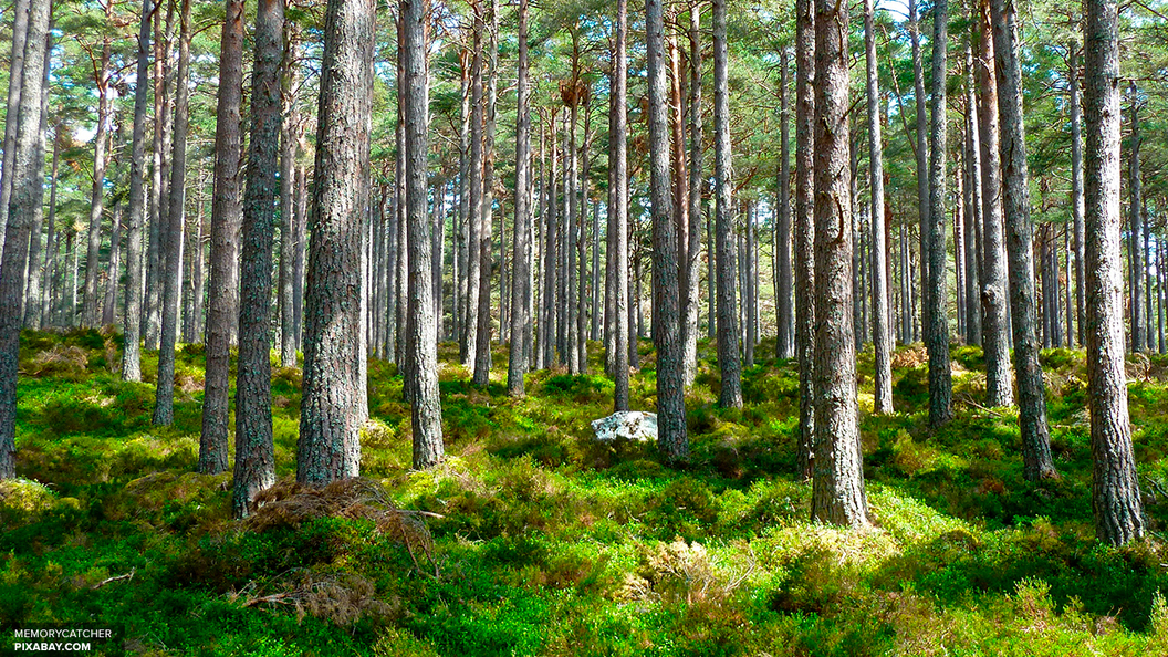 Легкие Москвы вошли в десятку экологически чистых регионов