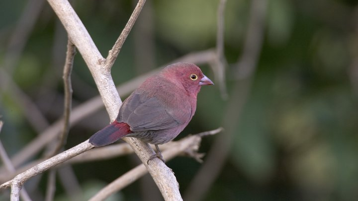 В США начали бороться с расизмом птиц