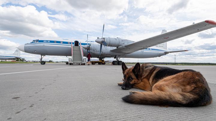 Собакам из России запретили въезд в США: Исключение только одно