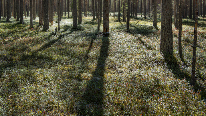 Пенсионер-инвалид не выбрался из леса под Рязанью