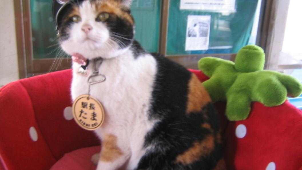 Сегодня отмечается день рождения Тамы - единственной в мире кошки-станционной смотрительницы из Японии