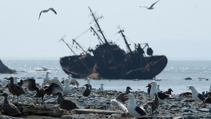 Камчатка – только начало: Политики добрались до экологии, и вот результат