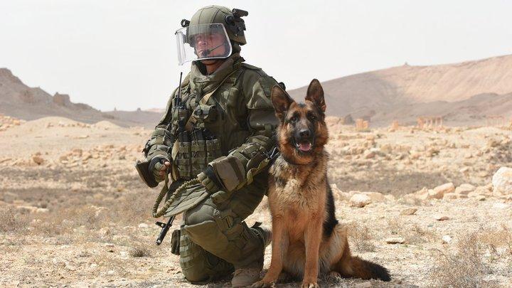 Выпить кофе, прокатиться на медведе и выиграть войну: Русский спецназ в Сирии удивил журналиста из США