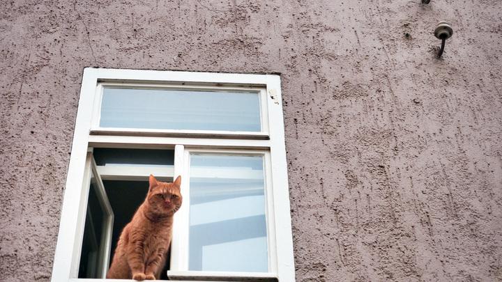 В столице Армении намерены массово чипировать домашних кошек и собак