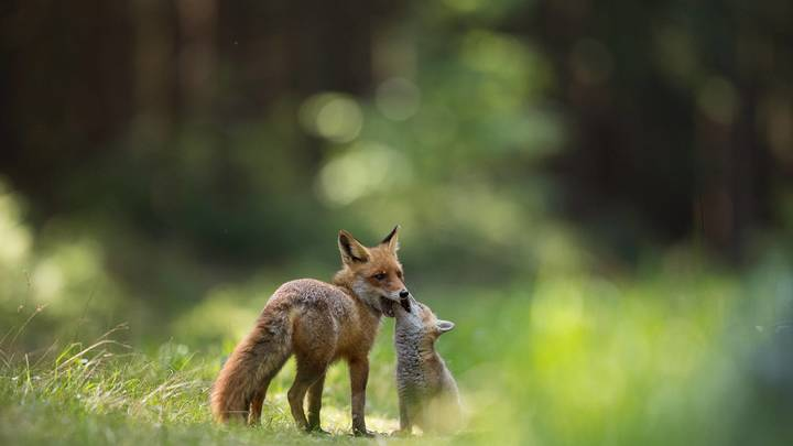 Биологический тупик: Онищенко объяснил эпидемию вируса у животных деградацией ветслужб