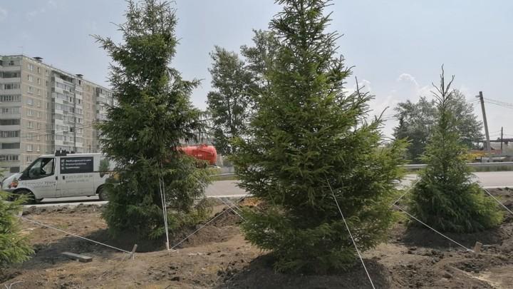 Челябинский Меридиан украсят ели и подсветка