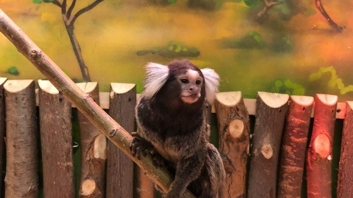 В челябинском зоопарке возобновили работу закрытые вольеры с экзотическими животными