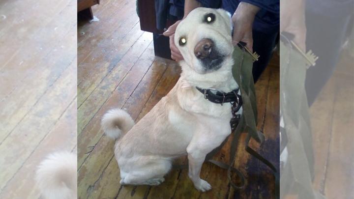 В Магнитогорске хотели усыпить собаку, которая три недели охраняла умершего хозяина