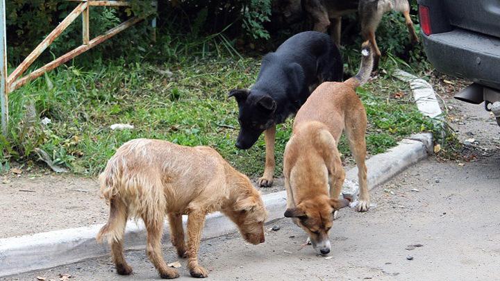 Отлов бездомных собак в Челябинске: куда обращаться