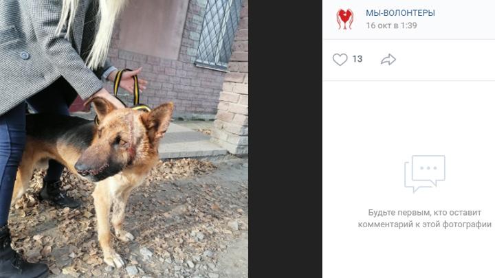 На курганца, который пытался зарубить свою собаку, завели уголовное дело
