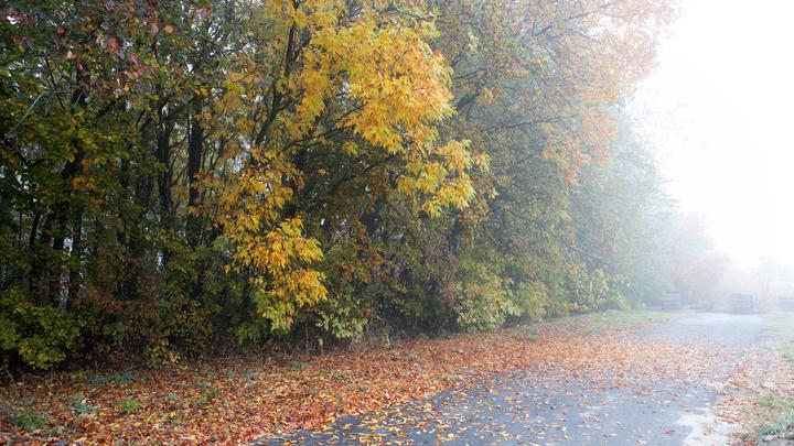 Погода в Челябинской области 4 ноября: туманы и +11 градусов
