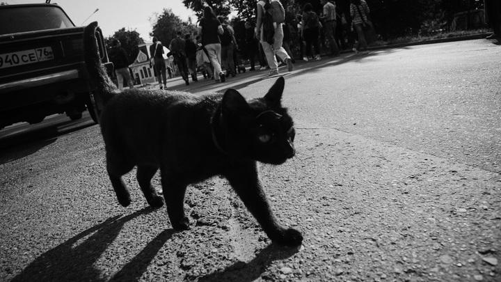 Курганцам предлагают подержаться за зуб кота