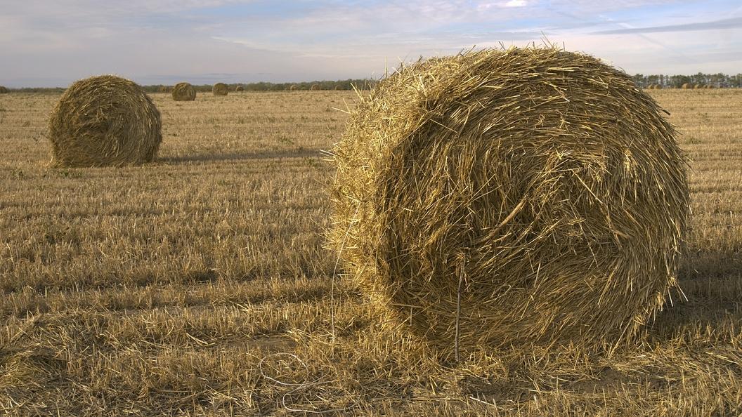 Россия стала больше продавать пшеницу за рубеж