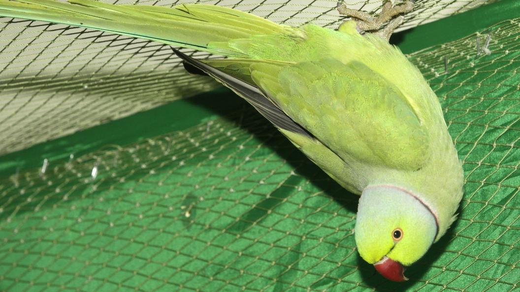 В США суд учел показания попугая по делу о бытовом убийстве