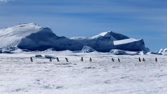Ученые: Эль-Ниньо подтачивает шельфовые ледники Антарктиды