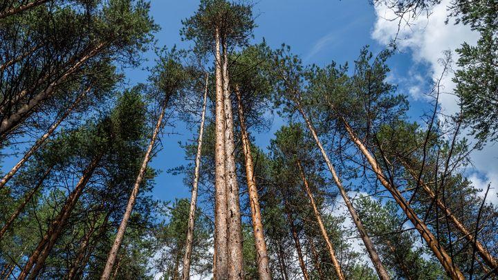 Вход в Шарташский лесопарк в Екатеринбурге через 10 лет станет платным