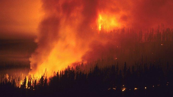 Военная авиация приступила к работе: Стали известны сроки тушения сибирских пожаров