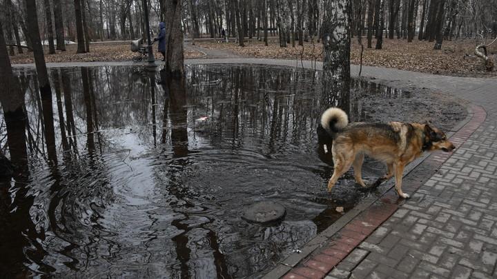 Жительница Новосибирска пожаловалась на агрессивных собак около центра города