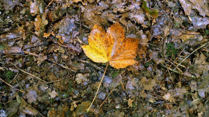 Тепло без радости: В Гидрометцентре прогнозируют неделю осенней серости