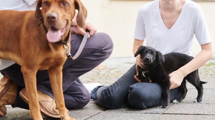 Это они от счастья: Раскрыт секрет чихания у собак