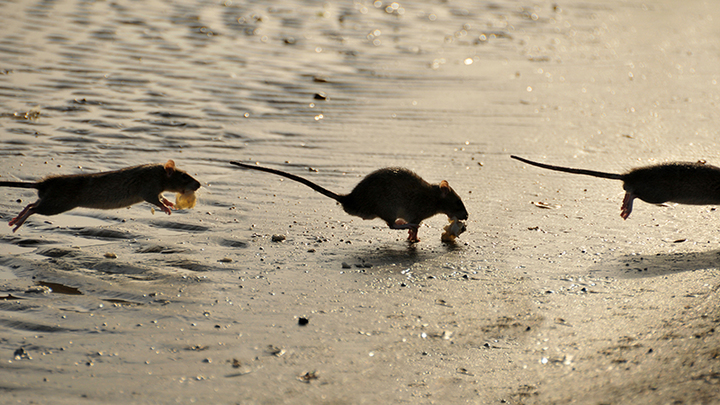 Крысиными тропами. Иноагент убежал в Европу без загранпаспорта