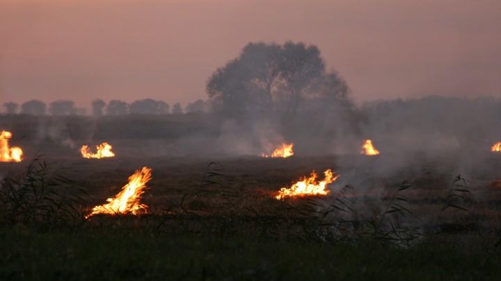 Лесные пожары едва не добрались до жилых домов в Курганской области