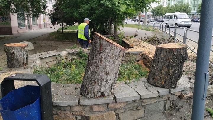 Рабочие признались, кто велел спилить даурскую лиственницу в Челябинске