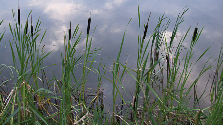 Два трупа нашли в озере Чебаркуль в Челябинской области