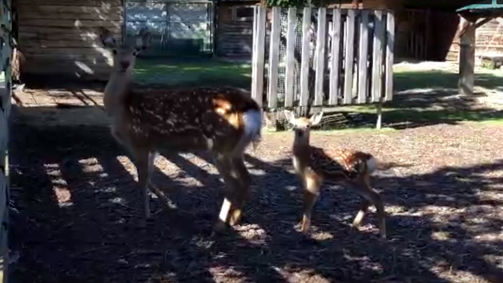 В челябинском зоопарке не знают, какого пола новый питомец