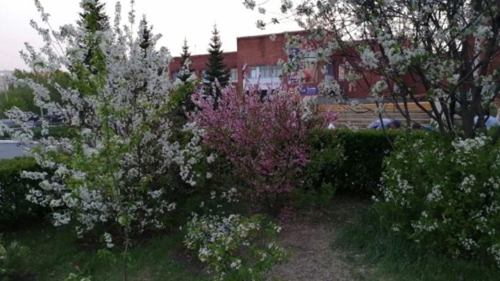 ЧелГУ огородил забором ботанический сад