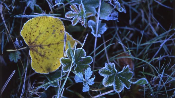 Заморозки до 4 градусов ниже нуля ожидаются в Ивановской области 29 сентября