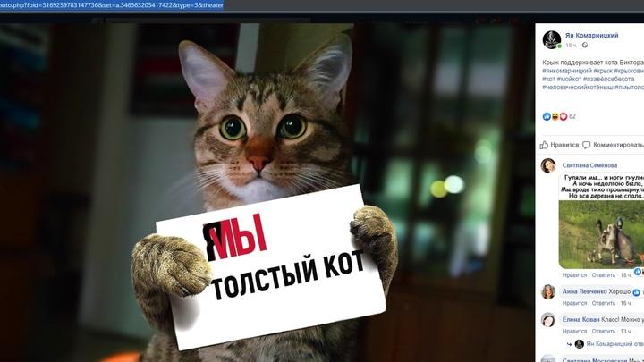 Я-мы толстый кот: Наказанного Аэрофлотом за спасение жизни четвероногого решили поддержать флешмобом