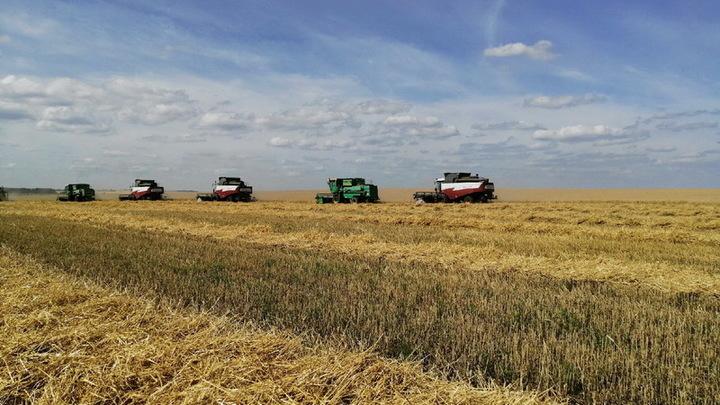 В Ивановской области намолотили первые 25 тысяч тонн зерна