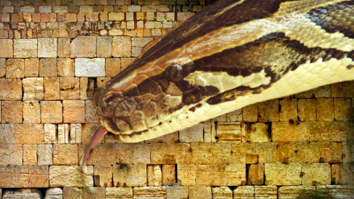 Змей на «стене плача»: Современный мир в ожидании антихриста