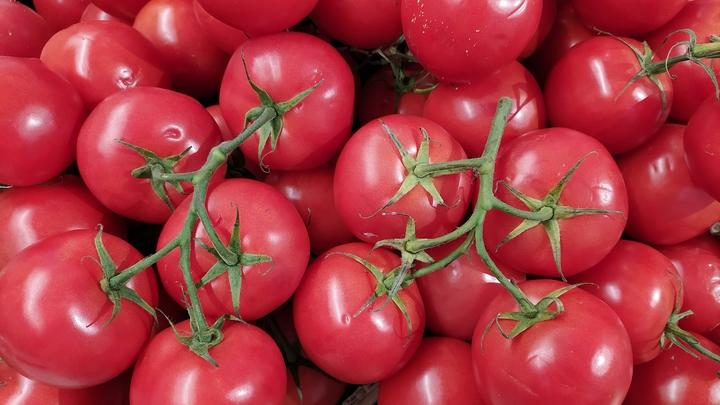 В Россию из Беларуси из-за «мозаики» не пустили больше 120 тонн помидоров