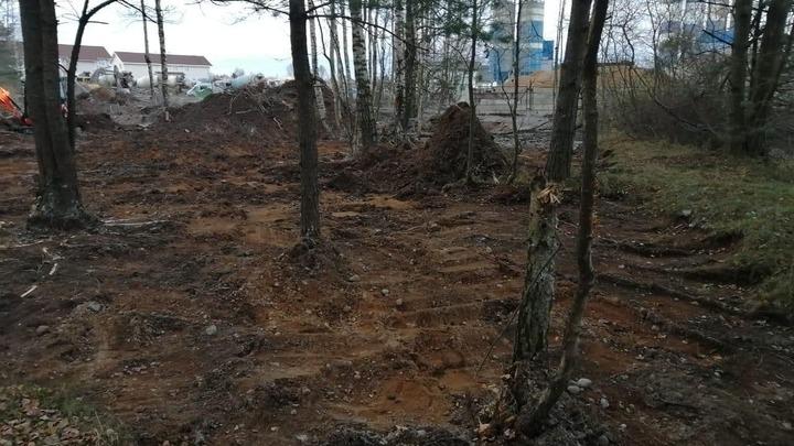 Лес, забетонированный в Ленинградской области, восстановят