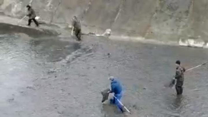 Рыбу ловят руками: Северное водохранилище в Ростове обмелело до дна после прорыва дамбы