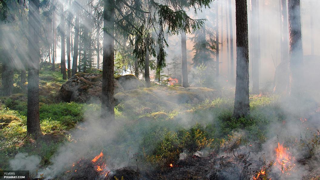 Извержение вулкана на Камчатке стало сюрпризом для ученых